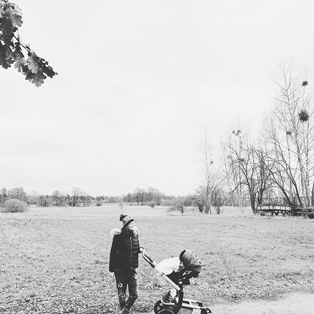 фото коляски Джулс Day 3 Quadro